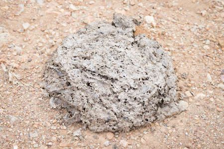 Elephant Dung on a path in Khao Yai National Park, Thailand Stock Photo