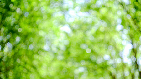bogey: Nature green concept blurred background in garden Stock Photo
