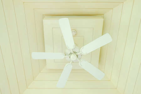 ceiling: Electric ceiling fan