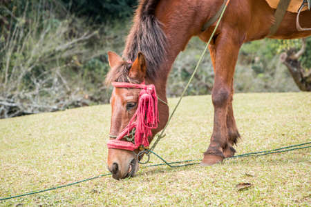 mule: mule among on the mountain
