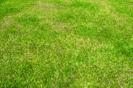 real green grass texture background