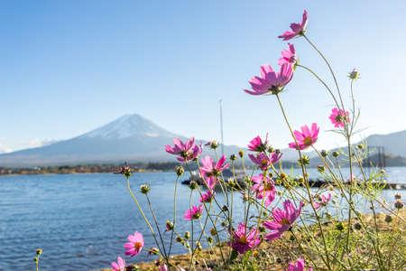 sengen: cosmos flower and Mountain Fuji in autum , japan