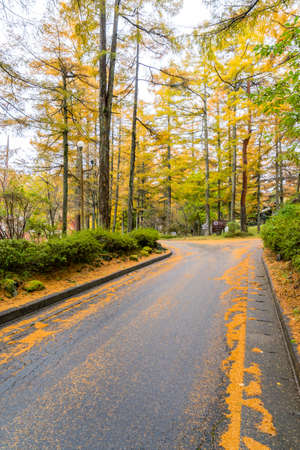 Road passing through a beautiful temperate forest at fall Imagens