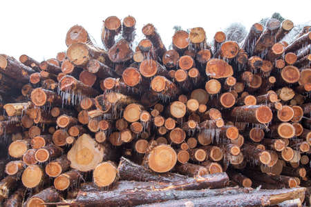 Abstract photo of a pile of natural wooden logs background in winter Stock Photo