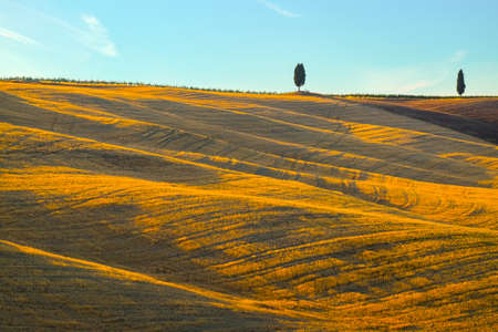 Landscape in Tuscany at in summer, italy