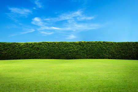 Fond de mur de feuilles vertes Banque d'images