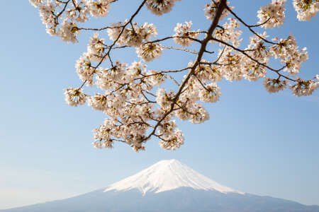 Cherry Blossom with Mt Fuji at lake Kawaguchiko Stock Photo