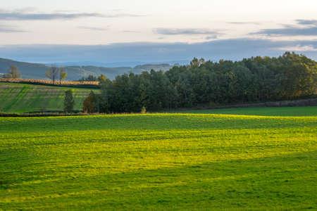 lanscapes green fields Biei in Japan Stock Photo