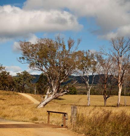cattle grid: Australian tree landscape