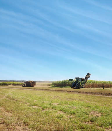 Australian rural agriculture sugarcane harvesting in spring with cloudy blue sky background photo