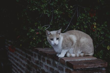 Nice white and brown cat sitting on the street
