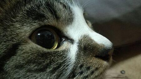 closeup: cat close up
