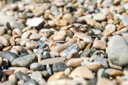 Background of small multicolored sea pebbles and seashells