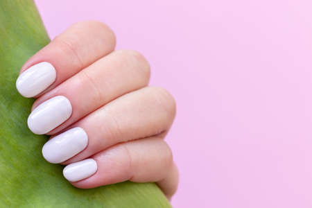 Female hand with beautiful manicure - white ivory nails with tulip flower leaf on pink blurred background, closeup with copy space. Selective focus