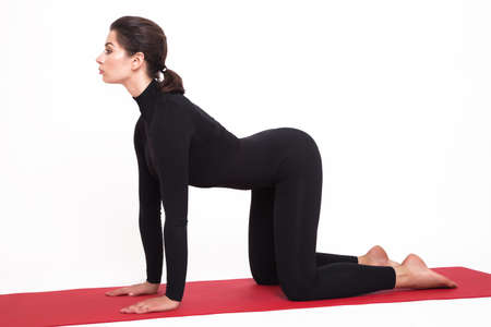 Beautiful athletic girl in a black suit doing yoga. mardjariasna asana - cat pose . Isolated on white background. Imagens