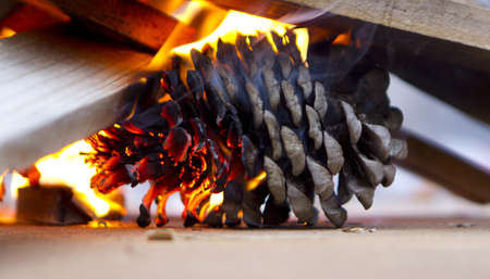 pinecone burning in a fire