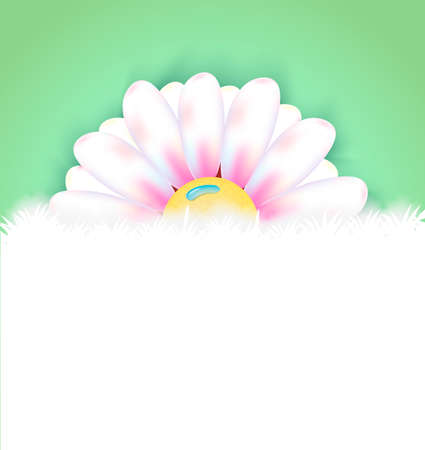 margerite: Spring flower with copy space background