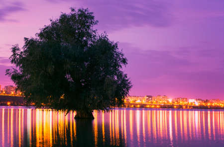 tree reflected in water with city lights in the background at sunset photo