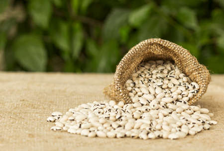 hessian bag: White beans in hessian bag with background defocus Stock Photo