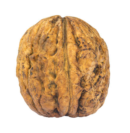 Single walnut isolated on white background photo
