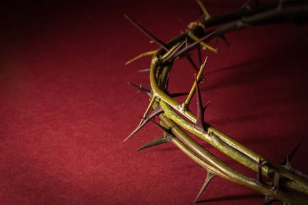 jesus christ crown of thorns: Closeup Crown of Thorns