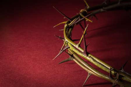 crown of thorns: Primer Corona de Espinas
