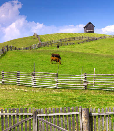 cottage fence: Farm scene with cows enclosed by a wooden fence and cottage on the hill