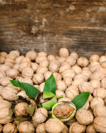 husks: Walnuts in green husks with leaves and walnuts
