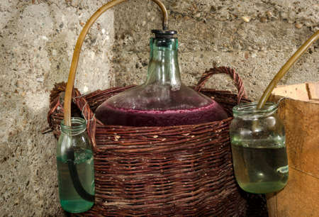 fermentation: Wine fermentation process in wine carboys
