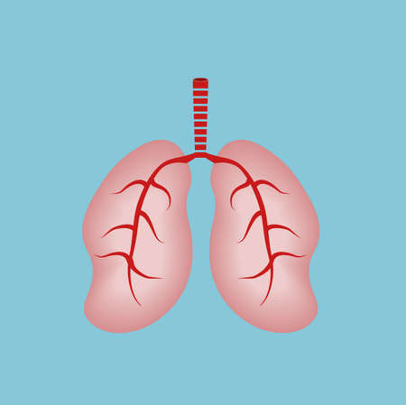 human lungs: Human Lungs Illustration