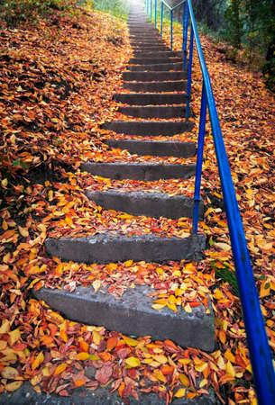hojas secas: Escaleras cubiertas con hojas de otoño Foto de archivo
