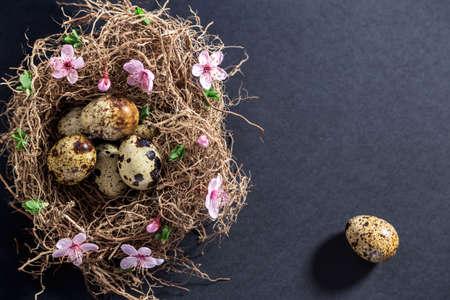 Quail eggs in nest with white spring flowers and buds Stock Photo