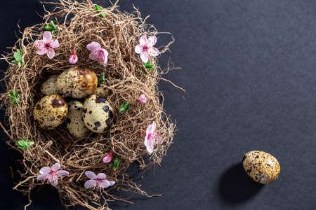 Wachteleier im Nest mit weißen Frühlingsblumen und Knospen