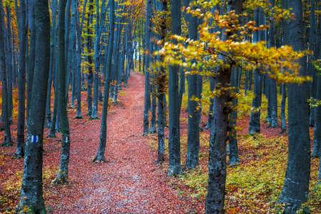 seasonic: Path through the forest in late autumn season