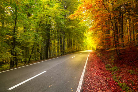 Het boslandschap van de herfst met stralen van warm licht die het gouden gebladerte verlichten Concept van twee seizoenen Stockfoto