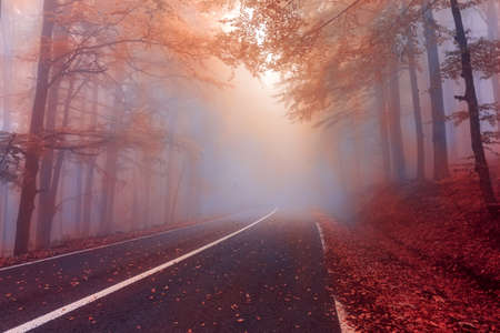 Autumn day in the foggy forest.Mysterious fog in the autumn forest.