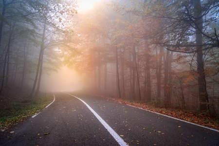 Asphalt road in a foggy autumn day