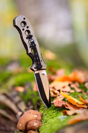 Metallic knife for hunting stuck in the forest