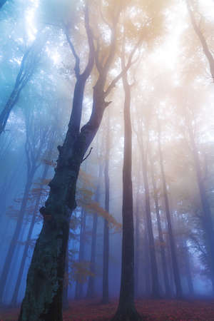 Mistic foggy forest. Light entering to the woods Stock Photo