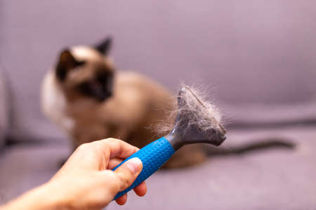 Person with fur comb for cat in hand. Hair of the cat on the brush. Concept of allergies, respiratory asthma to cats