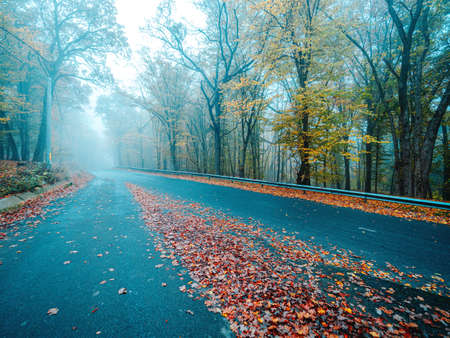 Asphalt road in beautiful mystical forest on blue fog in autumn. Stock fotó