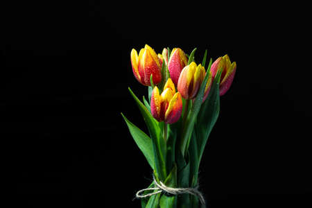Bunch of colored tulip flowers over black background. Tulip flowers isolated over black background Stock fotó