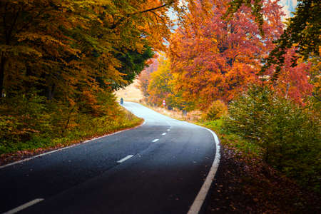 Asphalted road through the forest in autumn colors