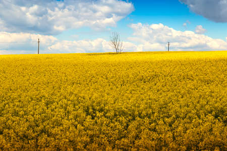 Yellow chain with rapeseed flowers and blue sky