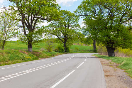 Paved road with road markings and trees on the side of the road in summer day. Stock fotó