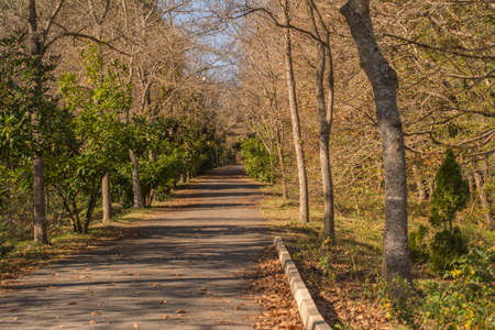 forest road: forest road Stock Photo