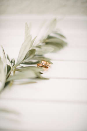 Wedding rings and olive branch. On a white background.