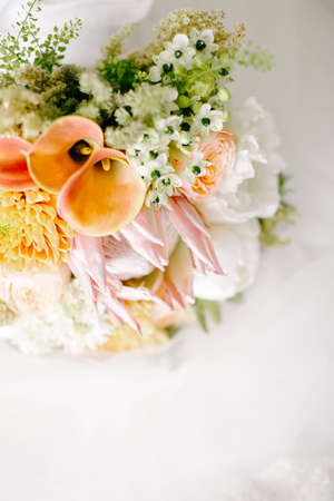 Bridal flower in pastel tones. On the white background.