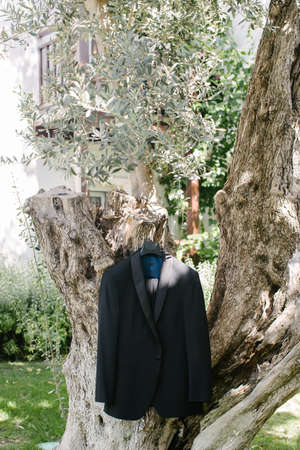 Wedding suit. Hanging on the olive tree.
