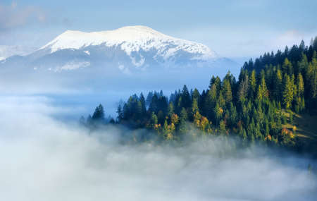 mystical forest: Mystical forest on the mountain slope